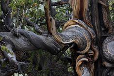 #Tree