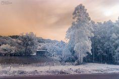 Árvores em Infrared | Minhas primeiras fotos utilizando filtro infravermelho (760nm).  My first pictures using infrared filter (760nm).  Eduardo Pasqualini Fotografias - Fotógrafo em Rio do Sul, Santa Catarina, Brasil.