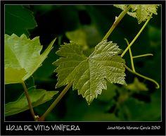 liberalización derechos plantación #enologia #vinos