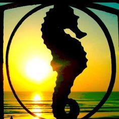 Sun and Seahorse ~ Ponte Vedra inn, Florida ♥