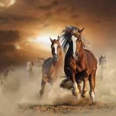 Photographic Print: Two Wild Chestnut Horses Running Together in Dust, Front View by mariait : 16x16in