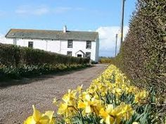 Image result for row of cottages Cumbria Cumbria, Storyboard, Cottages, The Row, Dots, Plants, Pictures, Image, Stitches