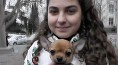 """An in the city of Sevastopol in Crimea has sent a letter to Vladimir Putin, telling the president she wanted a dog. Now she has become the happy owner of a chihuahua. """"I wrote: 'Dear Vladimir Vladimirovich Putin! Presents For Girls, Vladimir Putin, Chihuahua, French Bulldog, Presidents, Lettering, Photo And Video, Cats, Animals"""