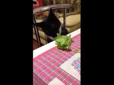 Momentos de Glória - Spoleta, o gato vegetariano