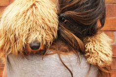Alf #australianlabradoodle www.criaderofrankontheroad.com Australian Labradoodle, Dreadlocks, Hair Styles, Beauty, Beleza, Dreads, Hair Makeup, Hair Looks, Haircut Styles