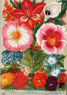 Vintage Flowers   Retrò Pop-art style