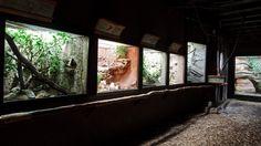 Terrarium -  Praha Zoo