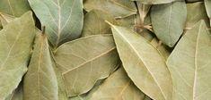 Organic Bay Leaves Whole Dried / Premium Quality Free P&P / - /Lovocado Bay Leaf Tree, Tree Leaves, Plant Leaves, Herbs For Protection, Burning Bay Leaves, Money Prayer, Money Spells That Work, Laurus Nobilis, Laurel Leaves