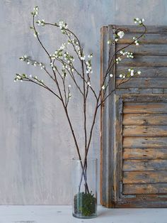 For an everlasting display of foliage and berries, you can't get better than this tall springy branch, which can be popped in a vase or bound into wreaths or garlands for a lovely seasonal display.