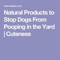 Natural Products to Stop Dogs From Pooping in the Yard | Cuteness