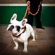 If Spot is a flight risk every time he's out of the house the sausage link leash is just what you need to keep them by your side. The leash is designed to look...
