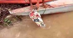 Βίντεο: Πιράνχας κατασπαράζουν κεφάλι ταύρου με απίστευτη ταχύτητα- Tρομακτική στιγμή