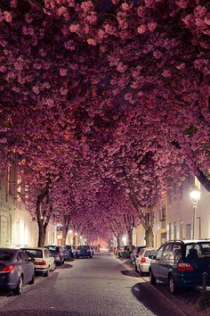 Rose-tint your world on Heerstraße in Bonn, Germany. | 10 Streets That Will Actually Warp You Into A Different Place