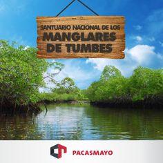 Santuario Nacional de los Manglares - Tumbes