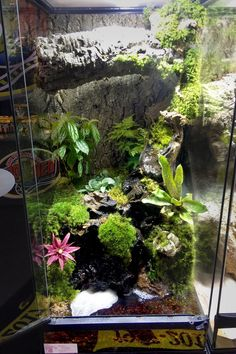 DIY this Zoo Med Skyscraper Terrarium with Frog Moss, Cork Rounds, Mopani Wood, ReptiSoil, Zoo Med's Waterfall Kit, and your choice of live plants. Perfect for dart frogs, arboreal snakes, and a variety of lizards.