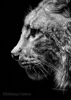 Amazing Expressions in Scratchboard Animal Portraits Animal Sketches, Animal Drawings, Photography Illustration, Illustration Art, Lynx, Scratchboard Art, Jungle Pattern, Scratch Art, Black And White Artwork