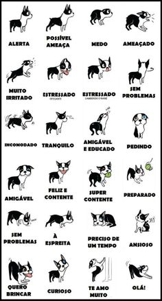 Entenda seu cão