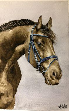 Andalusian horse watercolor