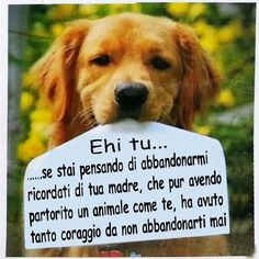 Più chiaro di così non si può .More clearly than that you can not Animals Of The World, Animals And Pets, Funny Animals, Cute Animals, Dog Lover Quotes, Dog Lovers, Respect Life, Hachiko, Yorky