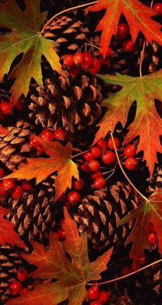 Autumn Pine Cones