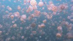 Take it easy, man. - effervescentvibes:   itscolossal:   Jellyfish...