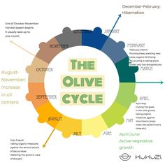 In the May newsletter, you could read about the olive cycle, the phases of the olive year and what actions need to be taken depending on…
