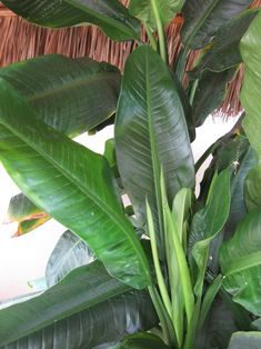 Low Light Plants, Peace Lily, Beautiful Flowers Garden, Houseplant, Low Lights, Plant Care, Plant Leaves, Canning, Tips