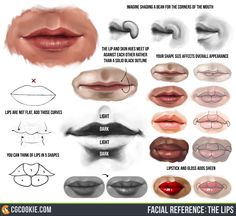 https://cgcookie.com/app/uploads/2016/01/facial_reference__the_lips_by_cgcookie-d5r5nit.jpg