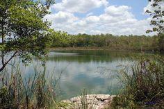 Dschungel und Mangroven