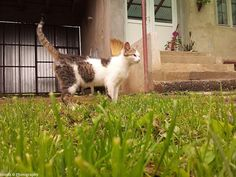 Ionutz Photography: The cat thought grass