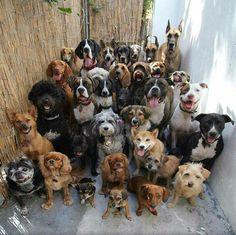 30 dogs posing.