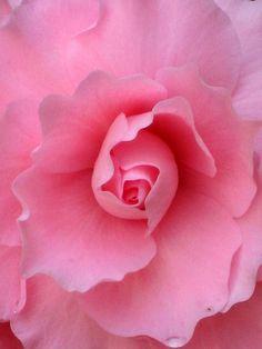 Pretty in Pink by Marla Ricigliano
