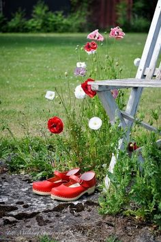 234 Best Aunt Emma's Summer Cottage images in 2020 White Cottage, Cottage Style, Red Poppies, Red Flowers, Lush Green, Red Green, Love Garden, Fun Shots, Garden Seating
