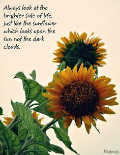 """Always look at the brighter side of life, just like the sunflower which looks upon the sun not the dark clouds."" Love this 💛🌻 Great Quotes, Quotes To Live By, Inspirational Quotes, Motivational, Super Quotes, Words Quotes, Me Quotes, Sayings, Nature Quotes"