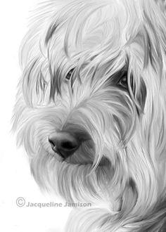 Original Art ACEO Yorkshire Terrier Yorkie