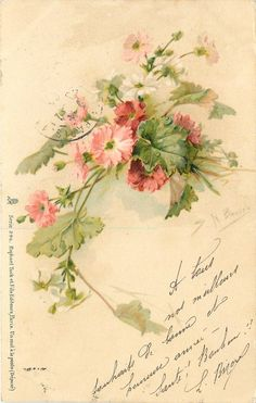 Pink geraniums, French postcard, 1903.