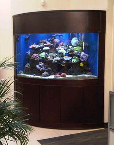 MV corner 2 Cheap Fish Tanks, Fish Tank For Sale, Saltwater Fish Tanks, Tropical Fish Tanks, Saltwater Aquarium, Aquarium Fish Tank, Bow Front Aquarium, Corner Aquarium, 20 Gallon Aquarium Stand