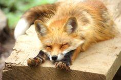 狐 - Google 検索