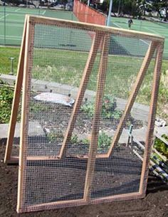 A Frame Pea & Cucumber Trellis and peas in the fall!