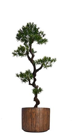 "Laura Ashley VHX122202 Yacca Tree Planter, 53"""