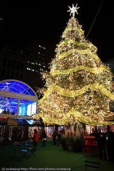 Bryant park Christmas tree, NYC