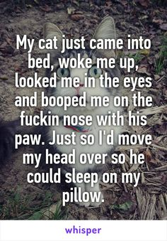 My cat just came into bed, woke me up, looked me in the eyes and booped me on the fuckin nose with his paw. Just so I'd move my head over so he could sleep on my pillow.