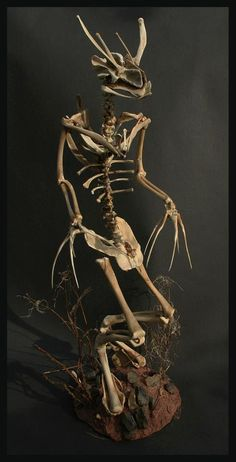 Bone Sculpture by Chris Richford: Furmico aegarica ~ An intelligent bipedal carnivore that inhabits British woodland and feeds mainly on rodents and small birds.