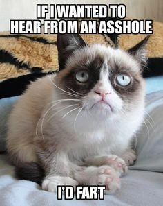 super Ideas for funny memes sarcastic seriously grumpy cat Funny Animal Quotes, Animal Jokes, Cute Funny Animals, Funny Animal Pictures, Sports Pictures, Funny Images, Funny Photos, Cat Sayings, Grumpy Cat Quotes