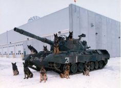 Now THAT'S what I call a K-9 unit.