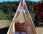 Tenda para Pets - Pronta Entrega
