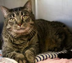 C-68786 Diane is a beautiful 11 yr old girl was surrendered through no fault of her own. She may  ... ...Read more about me on @petfinder.com