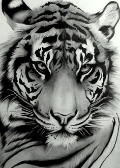 sumatran_tiger_by_artistelllie.jpg 2,146×2,990 pixels