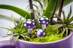 A personal favorite from my Etsy shop https://www.etsy.com/listing/225153961/mushroom-set-for-fairy-gardens-or