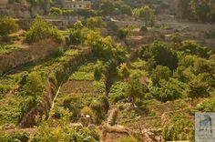 #Battir_Village_4